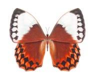 Rojo de la mariposa Imagenes de archivo