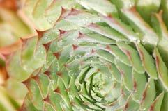 Rojo de la naturaleza del agua de la flor foto de archivo