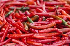 Rojo del color de fondo del chile Fotografía de archivo