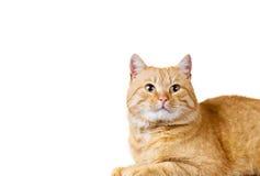 Rojo del gato foto de archivo libre de regalías