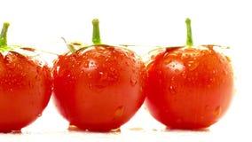 Rojo del tomate en un fondo blanco almacen de video