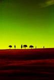 Rojo del verde de los cipreses de Toscana Imagen de archivo libre de regalías