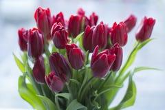 Rojo en florero y perro en la ventana Imagen de archivo libre de regalías