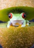 Rojo eyed imágenes de archivo libres de regalías