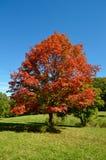 Rojo grande Imagen de archivo libre de regalías