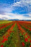 Rojo a la eternidad Foto de archivo libre de regalías