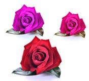 Rojo; Púrpura; Rosa del rosa aislada Imagen de archivo libre de regalías
