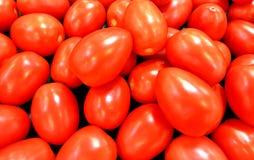 ` Rojo s de Roma Tomato Fotos de archivo libres de regalías