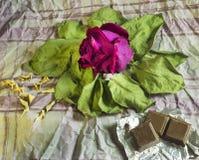 Rojo seque color de rosa en las hojas viejas fotos de archivo