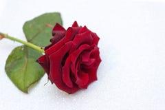 Rojo subió el fondo borroso del bokeh Tarjeta del día de San Valentín o fondo el casarse, tarjeta del día de tarjeta del día de S fotos de archivo