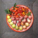 Rojo tropical foto de archivo libre de regalías