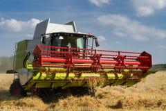 Rojo verde que trabaja cosechando la cosechadora en un campo del trigo en fron Imagenes de archivo