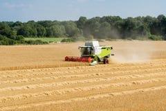 Rojo verde que trabaja cosechando la cosechadora en un campo del trigo en fron Foto de archivo libre de regalías