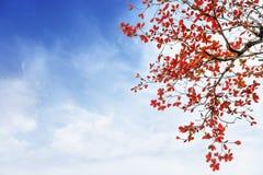 Rojo y árbol de las hojas de la naranja en otoño con la nube y el cielo azul Imagenes de archivo