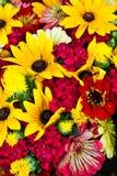 Rojo y amarillo Imagen de archivo libre de regalías
