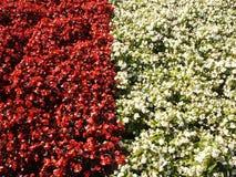 Rojo y blanco de la frontera Imagen de archivo libre de regalías