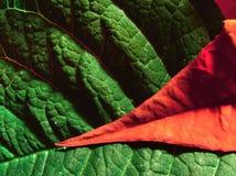 Rojo y verde Imagen de archivo libre de regalías