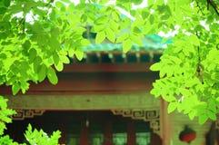 Rojo y verde Foto de archivo