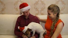 2018 rok pies szczęśliwa para terier jack Russell zbiory
