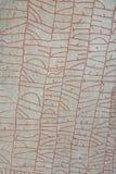 Rok runestone Fotografering för Bildbyråer