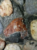 Stone texture. Kurdstany gull g Stock Images