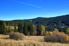 Rokyta, Tree, Autumn, Sumava, Boemerwald, Czech Republic Stock Photo
