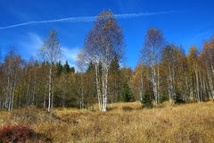 Rokyta, Tree, Autumn, Sumava, Boemerwald, Czech Republic Stock Image