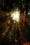 ROL dans la forêt Photographie stock libre de droits