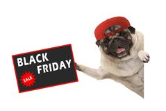 Rolic pug puppy dog with red cap, holding up sale sign with text Black Friday, hanging sideways from white banner stock photo