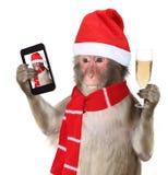 Rolig apa med den julsanta hatten som tar en selfie och en smilin Arkivbild