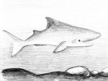 Rolig barnhaj Blyertspennor skissar illustrationen på ett papper royaltyfri fotografi