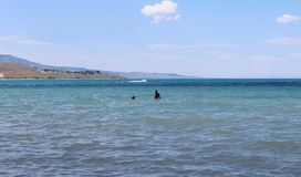 Rolig björn för sommar sjö Logan Utah arkivbild