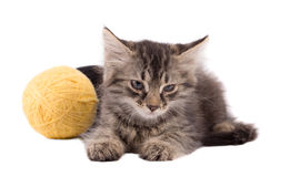 Rolig brun kattunge och boll av tråden Fotografering för Bildbyråer