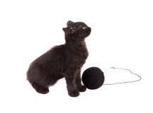 Rolig brun kattunge och boll av tråden Royaltyfri Foto