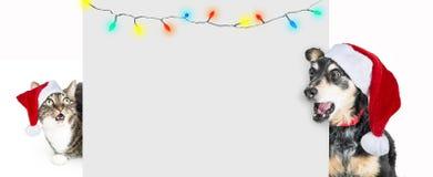 Rolig chockad hund och Cat With Christmas Message arkivbild