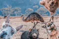 Rolig collage av djur som bor i Australien royaltyfri fotografi