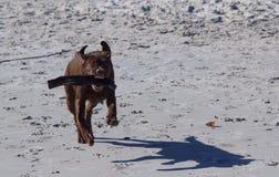 Rolig dag på stranden Fotografering för Bildbyråer