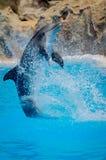 Rolig delfinbanhoppning Arkivfoton
