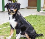 Rolig djur avel för rolig hund Royaltyfri Fotografi