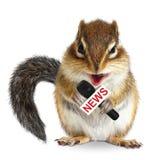 Rolig djur ekorre med nyheternamikrofonen Arkivbilder