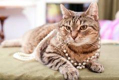 Rolig europeisk katt Royaltyfri Fotografi