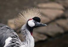 rolig fågel Fotografering för Bildbyråer