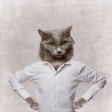 Rolig fluffig katt i exponeringsglas. collage på en grå färg Arkivbilder