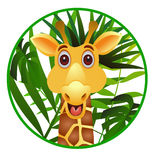 rolig giraff för tecknad film Arkivfoton