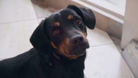 Rolig gullig hund framme av kameran arkivfilmer