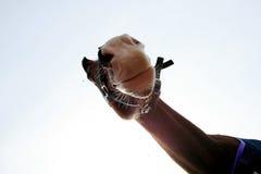 rolig häst Royaltyfri Foto