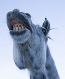 rolig häst för framsida Royaltyfria Bilder
