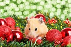 rolig hamster little arkivfoto
