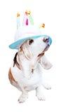 rolig hatt för basset Arkivfoton