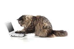 rolig härlig katt Fotografering för Bildbyråer